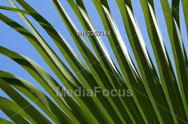 Green Palm Leaf Close-up Abstract Background Stock Photo