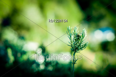 Green Plant Growing From Soil On Ground Stock Photo