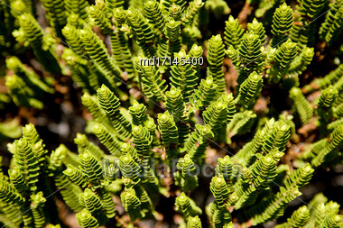 Green Plant New Zealand Decoration In Queenstown Stock Photo