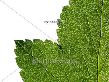 Green Sheet Tree Stock Photo