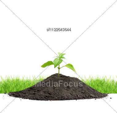 Green Sprouts Isolated Stock Photo