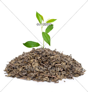 Green Tea With Leafs Stock Photo