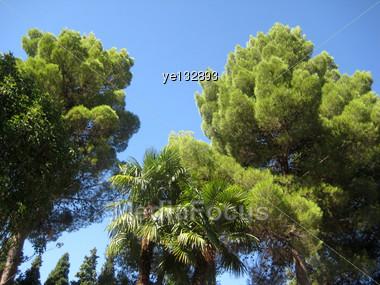 Green Tree In Garden Alhambra Granada Spain Stock Photo