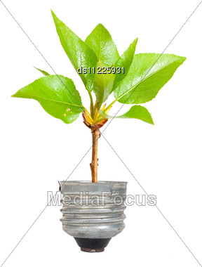 Green Tree Growing Out Of A Bulb Stock Photo