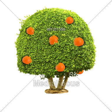 Green Tree With Orange Fruits Stock Photo