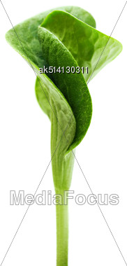 Green Twisted Sprout Isolated On White Background Stock Photo