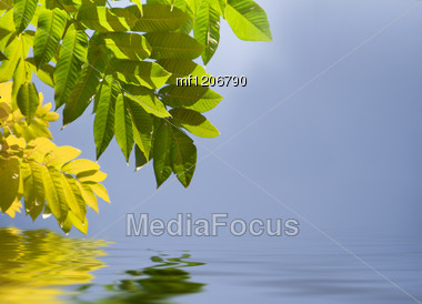 Green And Yellow Fresh Leaves Over Water Stock Photo