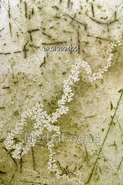 Grunge Dirty Surface With Worm Trace Stock Photo