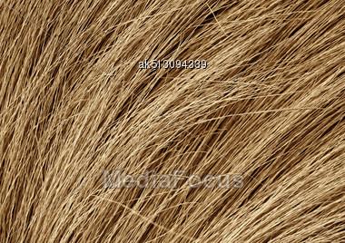 Grunge Texture Of Dry Grass Stock Photo