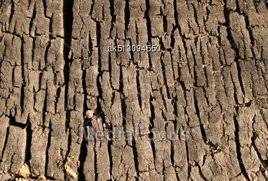Grunge Texture Of Old Stump Stock Photo