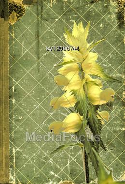 Grunge Vegetable Background Stock Photo
