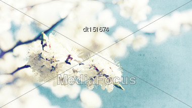 Grungy Floral Backgrounds With Old Paper Texture Stock Photo