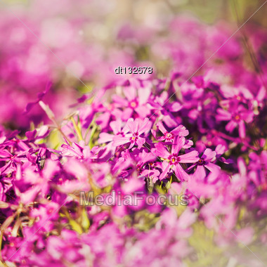 Grungy Floral Backgrounds With Very Shallow Focus For Your Design Stock Photo