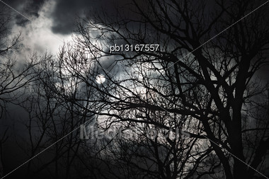 Halloween Abstract Scenery. Full Moon Behind Forest Silhouette Stock Photo