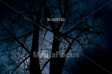 Halloween Terrible Black Forest Against The Background Of The Dark Sky Stock Photo