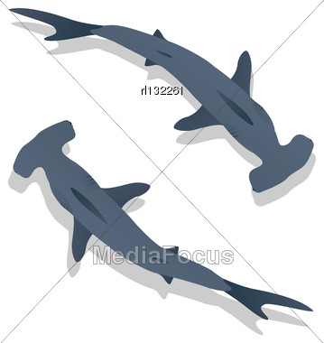 Hammer Sharks, Isolated Objects On White Background Stock Photo