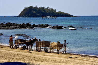 Hand Cart People Palm Dustman Branch Hill Lagoon Worker Animal And Coastline In Madagascar Nosy Be Stock Photo