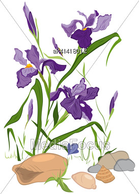 Hand Drawn Illustration Of Iris Blooms Flowers Isolated On White Stock Photo