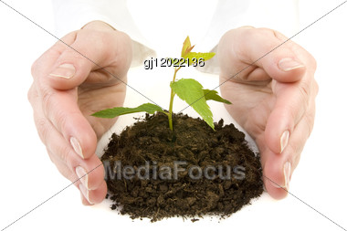 Hands And New Plant Stock Photo