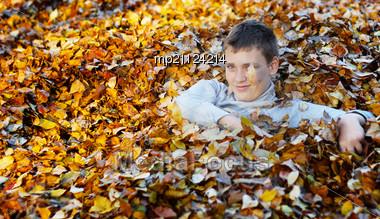 Happy Boy In Yellow And Orange Autumn Leaves Stock Photo