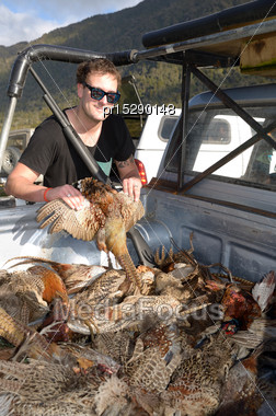 Happy Hunter Displays A Male Ring-necked Pheasant, Phasianus Colchinus, After A Day's Shooting On The West Coast Stock Photo