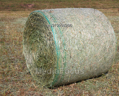 Harvested Field With Hay In Summer Stock Photo