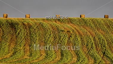 Hay Bales And Crop Design In Saskatchewan Canada Stock Photo