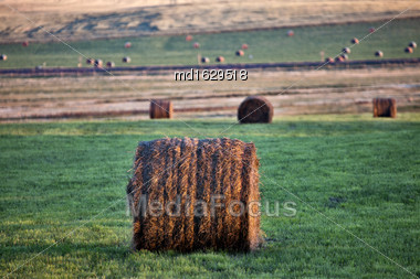 Hay Bales Saskatchewan Field Of Green And Brown Stock Photo