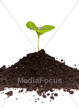 Heap Dirt With A Green Plant Sprout Stock Photo