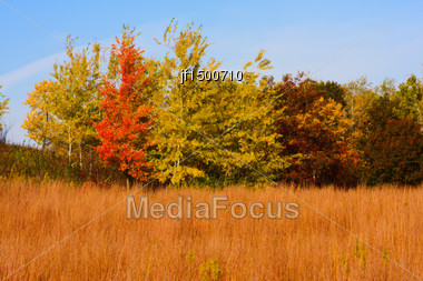 High Dynamic Range Image Of A Forest Stock Photo