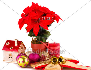 Holly Berry Flowers And Christmas Decoration Isolated On White Background Stock Photo