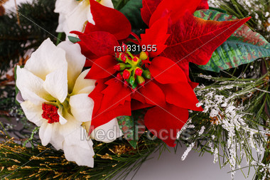 Holly Berry Red And White Flowers Closeup Image Stock Photo