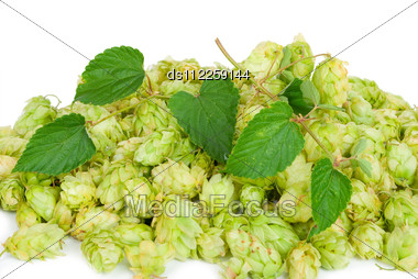 Hop With Leaves Stock Photo