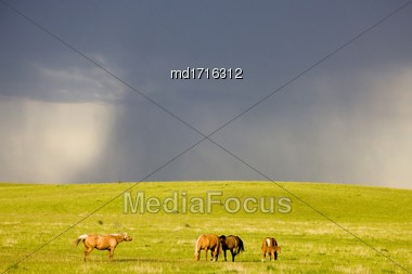 Horse And Colt Canada Storm In The Background Stock Photo