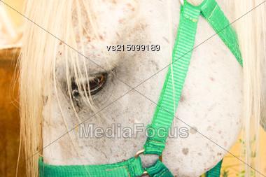 Horse Eye Close Up. Part Of A Horses Head Stock Photo