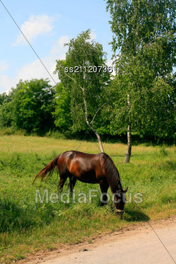 Horse In The Green Meadow On A Blue Sky Background Stock Photo