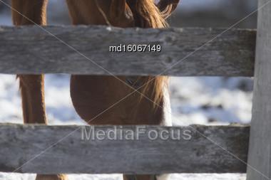 Horse In Winter In Alberta Canada Brown Stock Photo