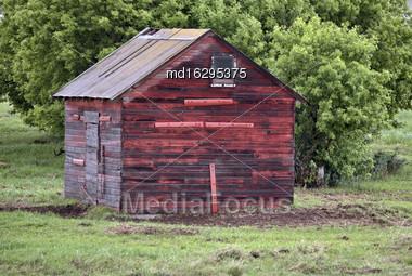 Horse In Sasklatchewan Summer Red Building Canada Stock Photo