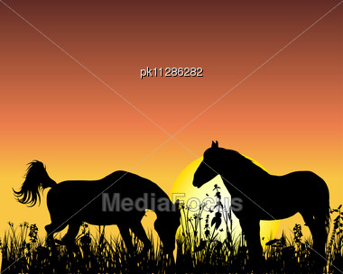 Horse Silhouette On Sunset Background. Stock Photo