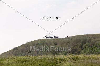 Horses On Ridge In Saskatchewan Canada Scenic Beauty Stock Photo
