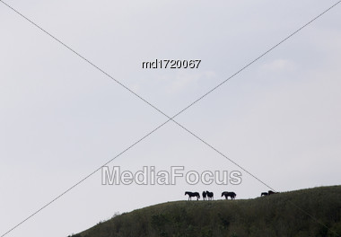 Horses On Ridge In Saskatchewan Canada Scenic Beauty Stock Photo