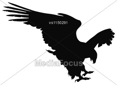 Hunting Eagle Detailed Vector Silhouette Stock Photo