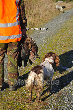 Hunting Guide Pauses With Three Pheasants On The West Coast, South Island, New Zealand Stock Photo