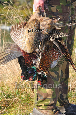 Hunting Guide With Three Pheasants On The West Coast, South Island, New Zealand Stock Photo