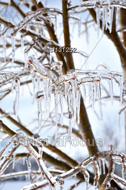 Icecircles On The Tree Branches, Close Up Stock Photo