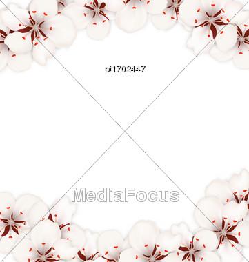 Illustration Abstract Border Made In Cherry Blossom. Layout, Card, Template, Sakura, Japan, Invitation - Vector Stock Photo