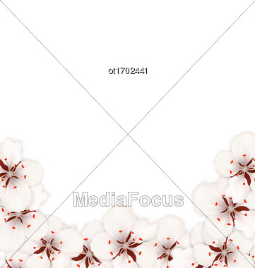 Illustration Abstract Border Made In Sakura Flowers Blossom. Layout, Card, Template, Sakura, Japan, Invitation - Vector Stock Photo