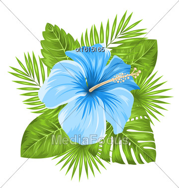 Illustration Beautiful Blue Hibiscus Flowers Blossom And Tropical Leaves, Isolated On White Background - Vector Stock Photo