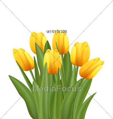 Illustration Beautiful Bouquet With Yellow Tulips Flowers Isolated On White Background - Vector Stock Photo