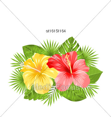 Illustration Beautiful Colorful Hibiscus Flowers Blossom And Tropical Leaves, Isolated On White Background. Copy Space For Your Text - Vector Stock Photo